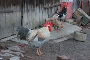 Vidéki élet - Báthori Cserne