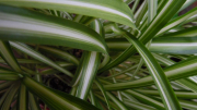 Zöld-Veress Dóri fotója